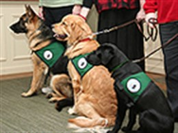 Seeing Eye® dogs being recognized for their wonderful work.