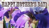 Mothers Day - Iris